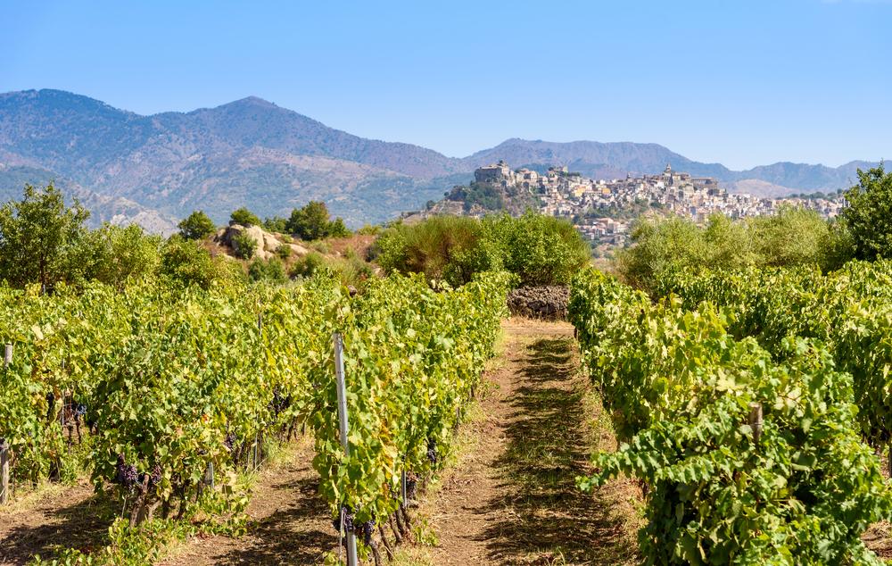 Paesaggio della Sicilia con vigneti