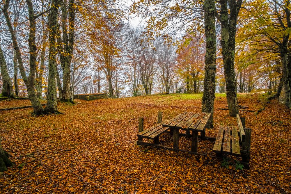 Parco dei Nebrodi in autunno